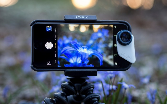 A phone is filming flowers on a mobile tripod