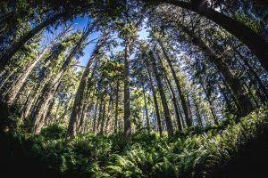 A fisheye lens captures a dense forest from the group looking up